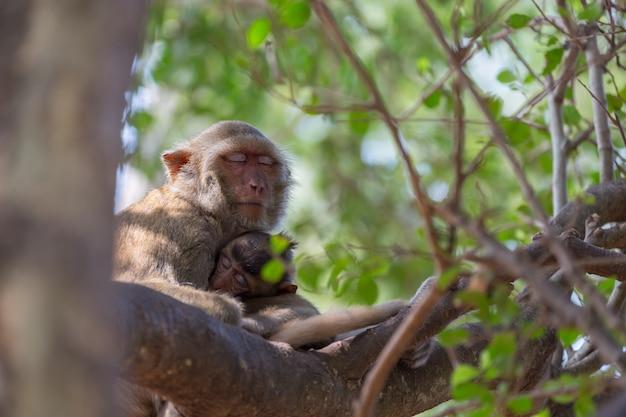 Małpa bierze odpoczynek na drzewnym tle