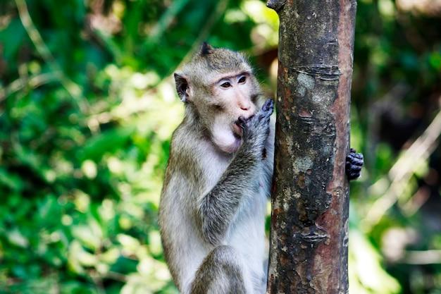 Małpa jeść tło warzyw