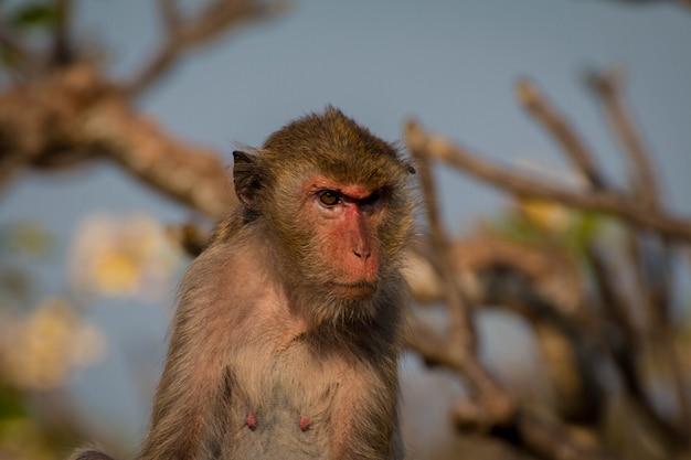 Małpa sama w centrum miasta radość