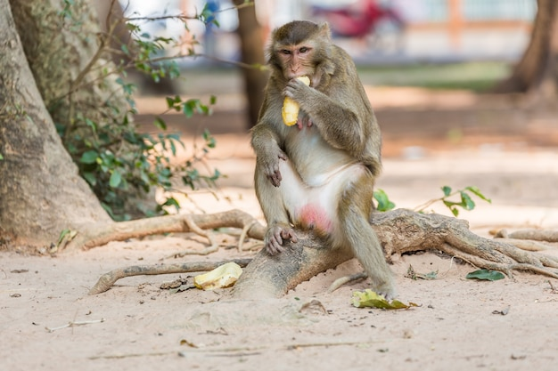 Małpa siedzi na drzewie i zjada banana, natura