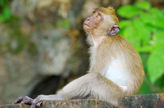 Małpa siedzi na drzewie