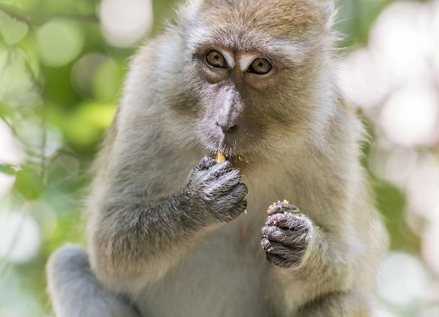 Małpa siedzi na gałęzi drzewa, jedzenie owoców