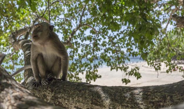 Małpa siedzi na gałęzi drzewa