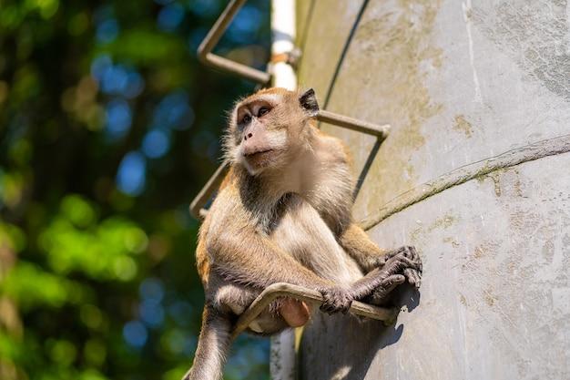 Małpa siedzi na metalowych stopniach rury