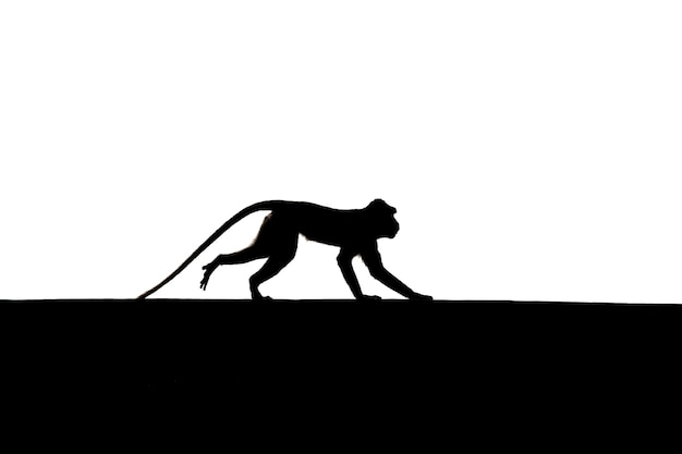 Małpa skacząca sylwetka cień na ścianie