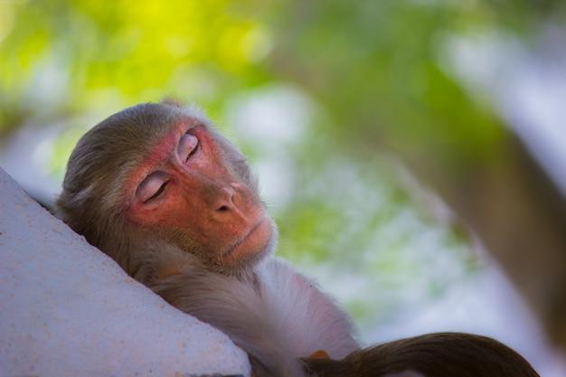 Małpa śpi pod drzewem