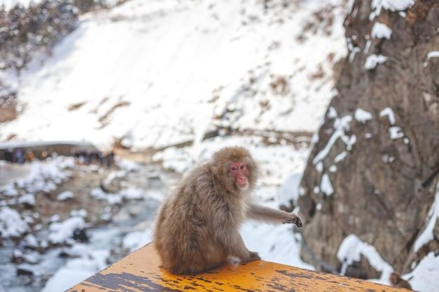Małpa w naturze
