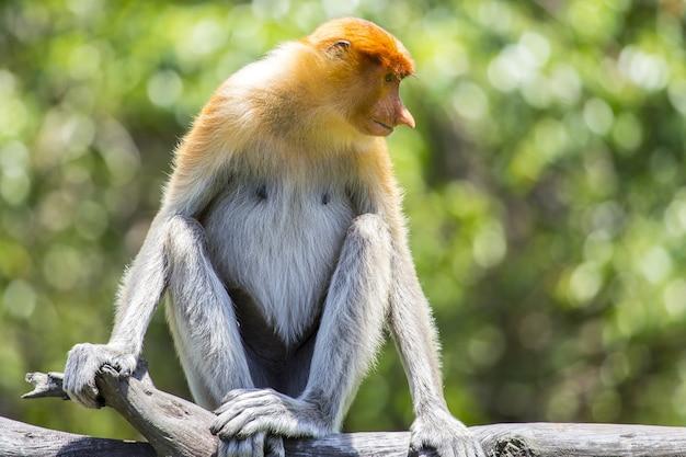Małpa w parku spilok