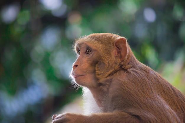 Małpa wygląda bardzo ciekawie