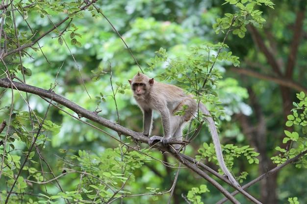 Małpia przerwa na dużym gałęziastym drzewie w naturze