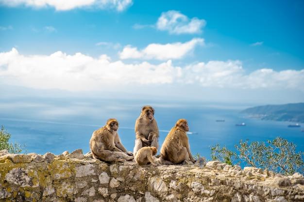 Małpia rodzina na ścianie przy wycieczkową ścieżką jako atrakcja dla turystów