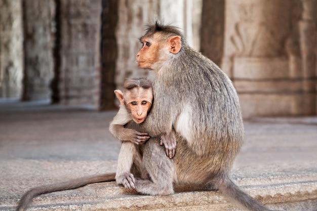 Małpia rodzina
