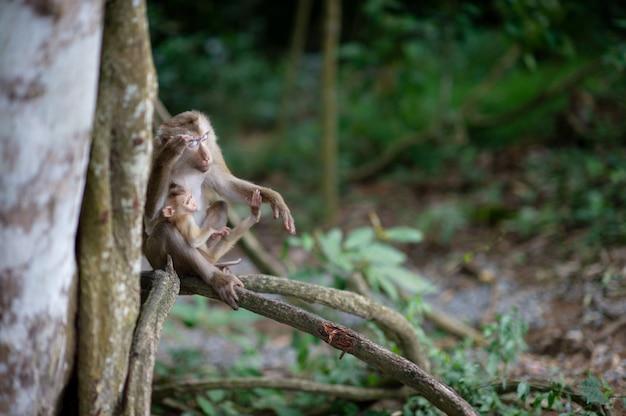 Małpy i małpy w żyznym lesie