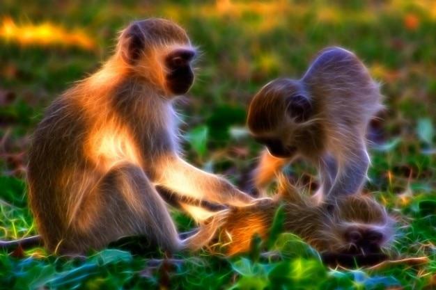Małpy vervet abstrakcja