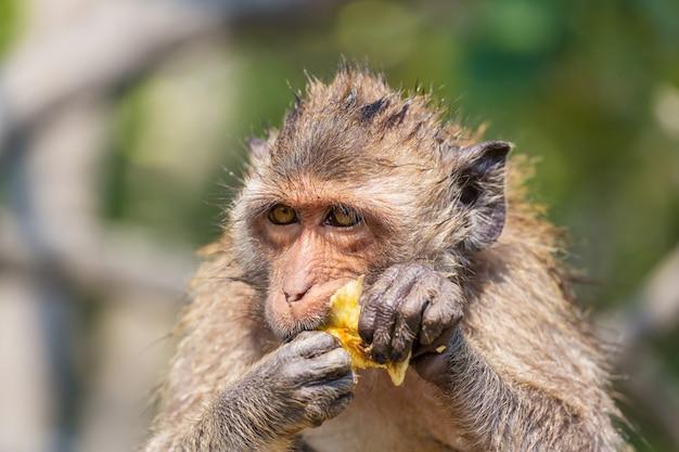 Małpy w indonezyjskiej świątyni