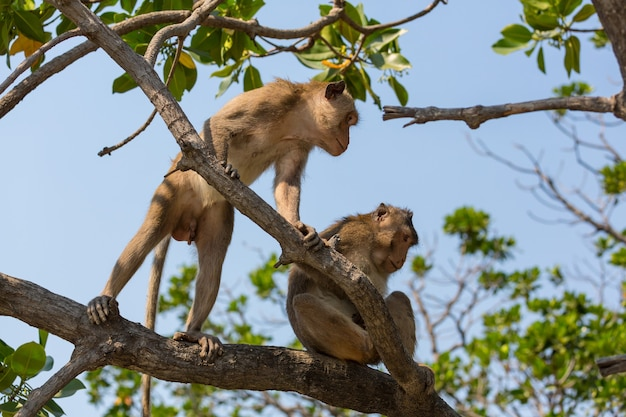 Małpy w tropikalnym lesie w tajlandii