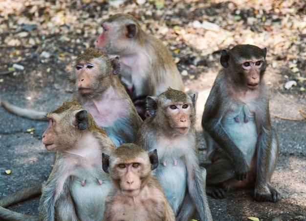 Małpy zwierzęcia ssak natura tropikalna