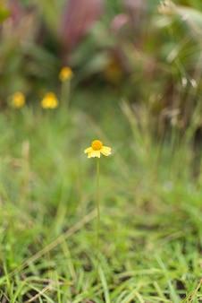 Malutki kwiatu dorośnięcie w ogródzie