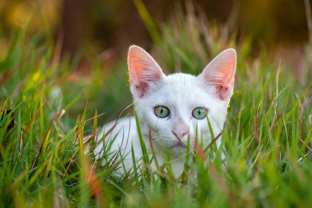Mały biały kot zamknięty na trawie - młody pussycat