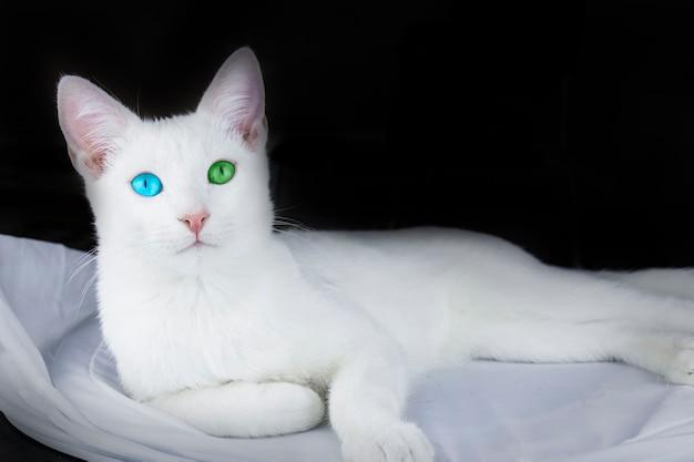 Mały biały kotek leżący na białym płótnie