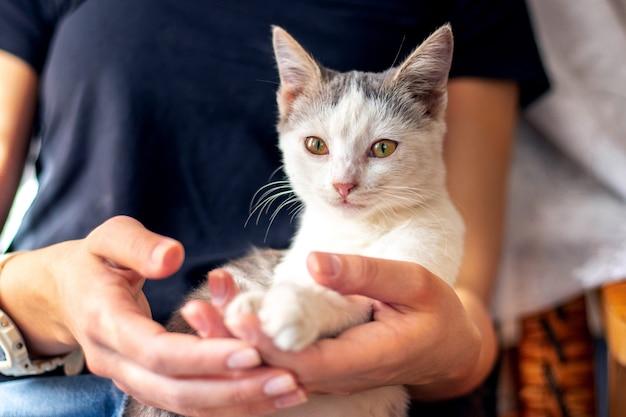 Mały biały kotek w ramionach dziewczynki