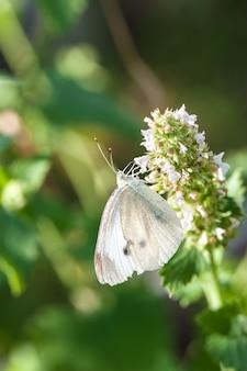 Mały biały motyl na zielonym liściu
