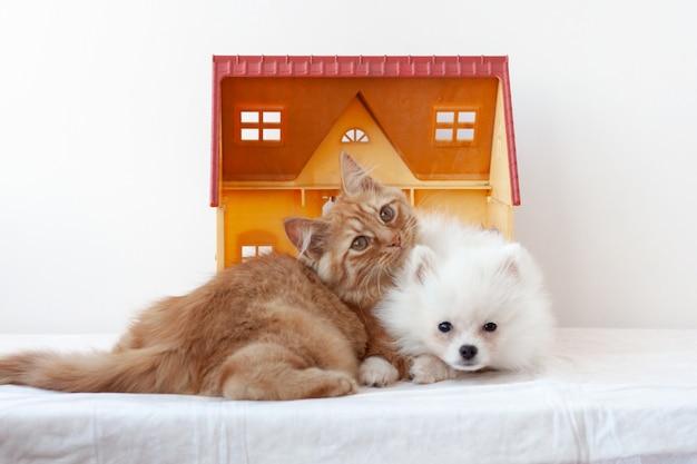 Mały biały puszysty pomorski szczeniak i mały rudy kociak leżą w domku z zabawkami, przytuleni do siebie, kociak kładzie głowę na szczeniaku.