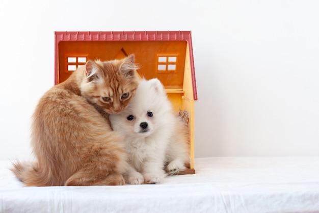 Mały biały puszysty pomorski szczeniak i mały rudy kociak siedzą w domku z zabawkami, przytuleni do siebie.
