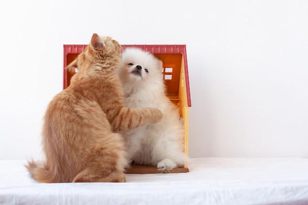 Mały biały puszysty szczeniak pomorski i mały rudy kociak siedzą w domku z zabawkami, kociak przytula szczeniaka łapką.