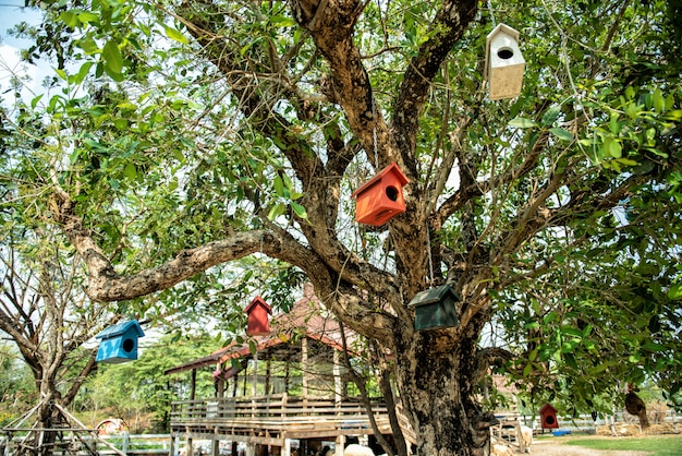 Mały birdhouse w drzewie. drewniany ptaszarnia w gospodarstwie rolnym i wiosna lesie.