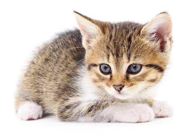 Mały brązowy kotek na białym tle