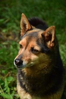 Mały brązowy pies patrzy w lewo na zieloną, jasną trawę w parku. tło jest bardzo rozmyte