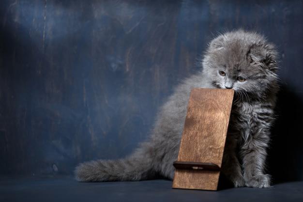 Mały brytyjski zwisłouchy kociak gryzie na drewnianym stojaku na telefon
