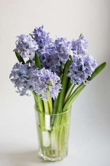 Mały bukiet niebieskich wiosennych kwiatów hiacyntu