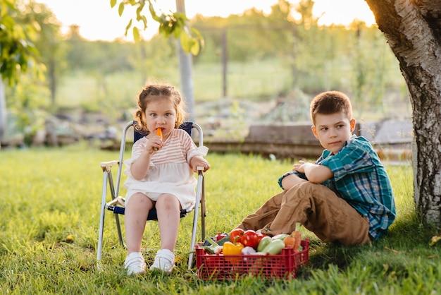 Mały chłopiec i dziewczynka siedzą pod drzewem w ogrodzie z pudełkiem warzyw
