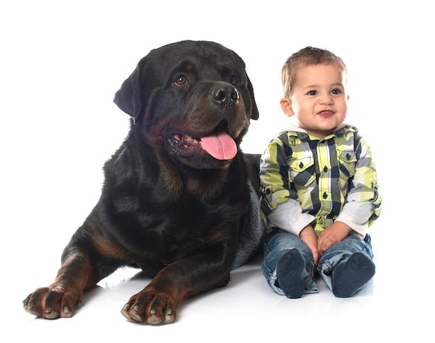 Mały chłopiec i rottweiler
