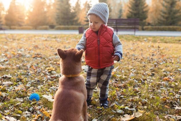 Mały chłopiec karmi szczeniaka shiba inu podczas spaceru w jesiennym parku. pies shibainu z dzieckiem bawiącym się razem, koncepcja najlepszych przyjaciół