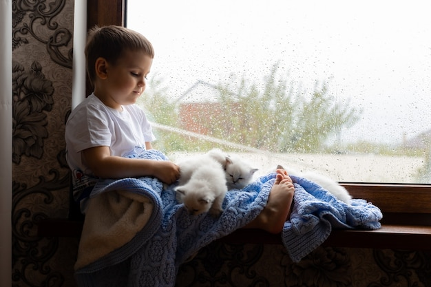 Mały chłopiec okryty niebieskim dzianinowym kocem siedzi na parapecie z białymi puszystymi kociakami