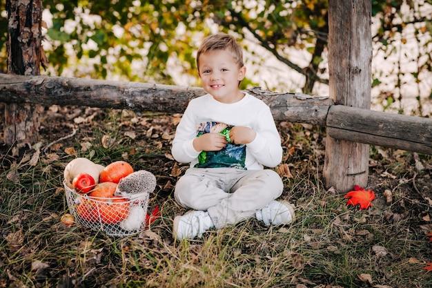 Mały chłopiec siedzi na jesiennej trawie obok kosza z dyniami i małego jeża