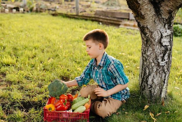 Mały chłopiec siedzi pod drzewem w ogrodzie z pudełkiem warzyw