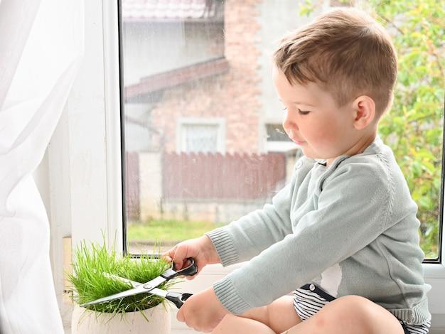 Mały chłopiec tnie trawy nożyczkami