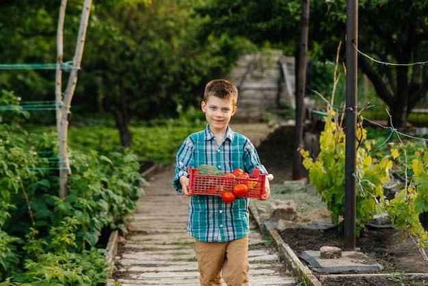 Mały chłopiec trzyma pudełko warzyw