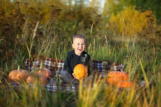 Mały chłopiec wybiera idealną dynię z targu