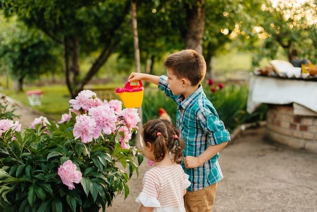 Mały chłopiec z siostrą podlewania pięknych różowych kwiatów piwonii podczas zachodu słońca w ogrodzie i uśmiechnięty. rolnictwo, ogrodnictwo.