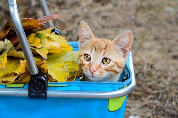 Mały czerwony kot w koszu na ulicie z jesień liśćmi. może być stosowany do kalendarzy, pocztówek.
