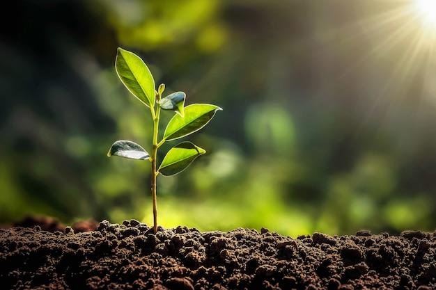 Mały drzewny dorośnięcie z światłem słonecznym w ogródzie. koncepcja eko