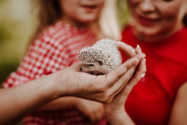Mały dziki jeż na ludzkich rękach