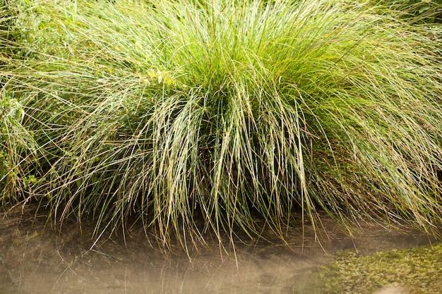 Mały dziki potok z jego zieloną roślinnością