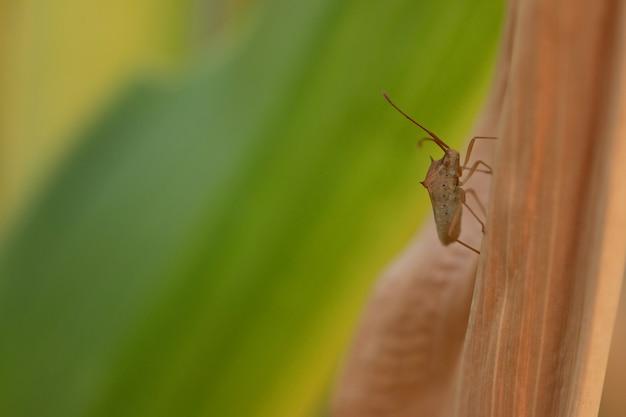 Mały dziwny owad na suchych liściach w polu o zachodzie słońca
