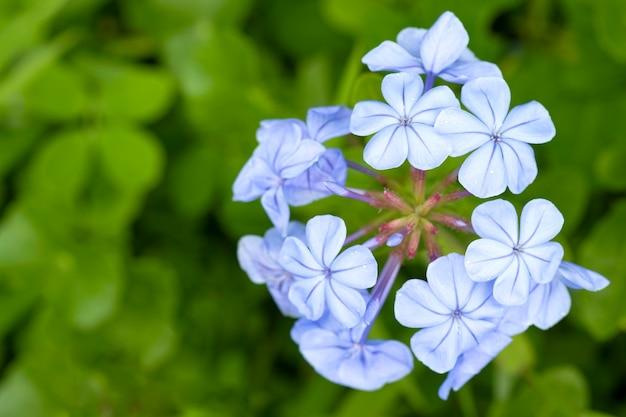 Mały fioletowy kwiat i zielone liście w górnym rogu natury.
